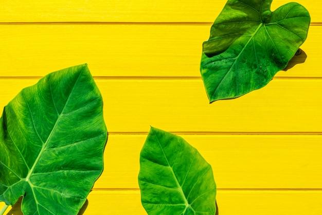 Vista superior verde bon deixa na textura de madeira amarela