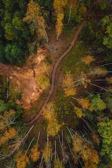 Vista superior vertical de um caminho através de uma floresta densa em um dia de outono