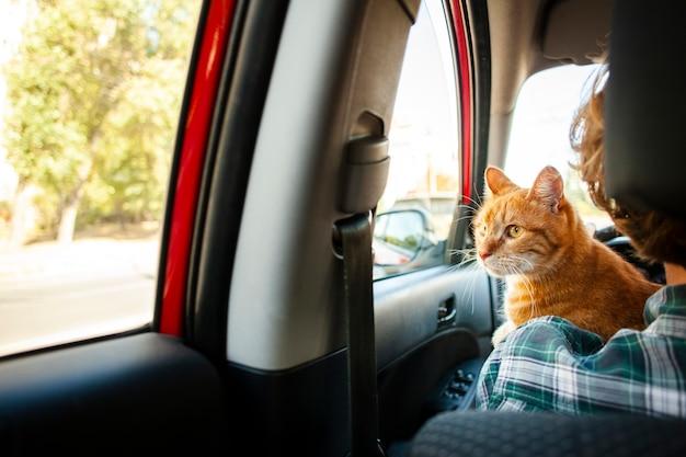 Vista traseira adorável gato olhando no carro da janela