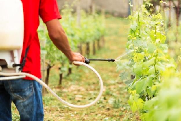 Vista traseira, agricultor, aguando, plantação