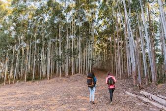 Vista traseira, de, duas mulheres, explorando, floresta densa