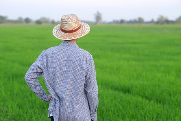 Vista traseira de um agricultor asiático olhando para uma fazenda de arroz verde