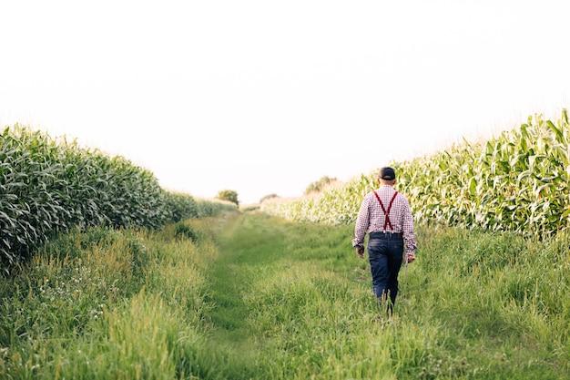 Vista traseira de um agricultor caminhando ao longo da estrada ao longo dos campos de milho em sua mão carregando um tablet