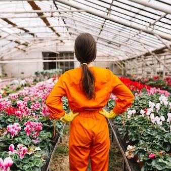 Vista traseira, de, um, jardineiro fêmea, ficar, em, estufa