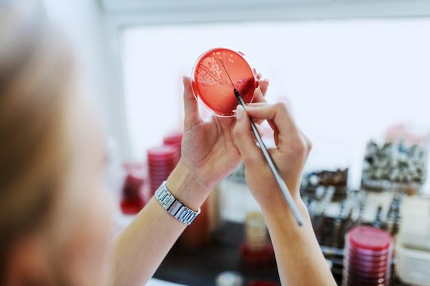 Vista traseira do assistente de laboratório caucasiano semeando bactérias na placa de petri em pé no laboratório.