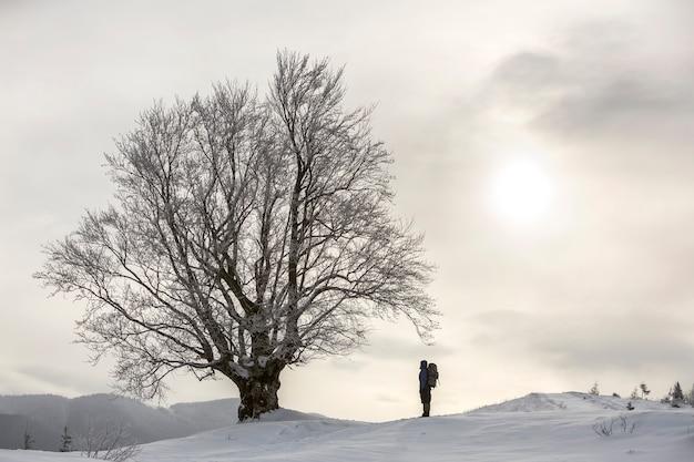 Vista traseira do caminhante do turista com a mochila em pé na neve profunda limpa branca na grande árvore no fundo das montanhas arborizadas e céu nublado.