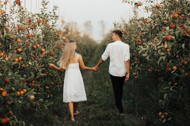 Vista traseira do casal romântico caminha no pomar de maçãs em dia de verão. eles estão de mãos dadas.