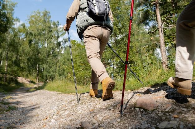 Vista traseira do homem ativo com bastões de trekking descendo a estrada da floresta com pinheiros e o céu azul no fundo