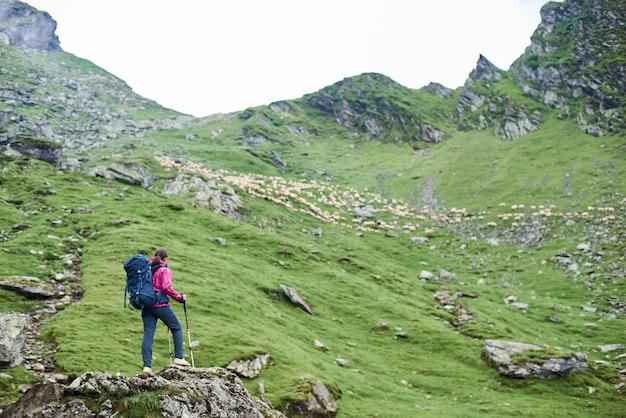 Vista traseira do jovem turista feminina com bengalas em pé na borda da rocha, admirando a beleza das montanhas rochosas verdes e prados e ovelhas