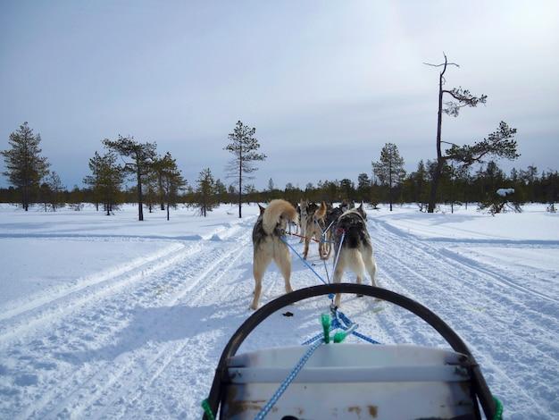 Vista traseira dos cães de trenó na estrada coberta de neve na floresta nevada