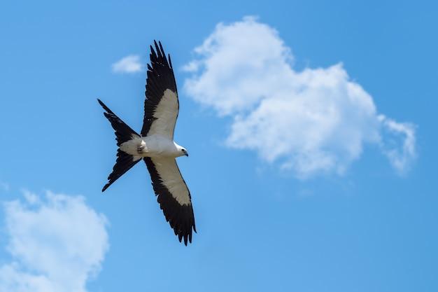 Vista ventral de uma pipa voando com o céu ao fundo