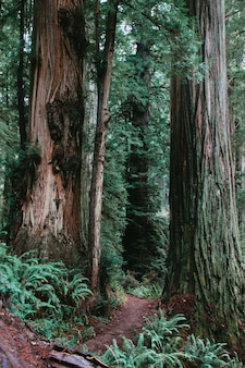 Vista vertical de um caminho cercado por vegetação em uma floresta durante o dia - legal para planos de fundo