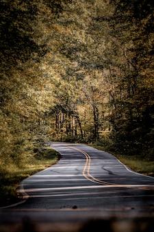 Vista vertical de uma estrada cercada por uma floresta de outono