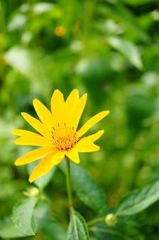 Vista vertical em close de uma flor amarela desabrochando com vegetação no fundo
