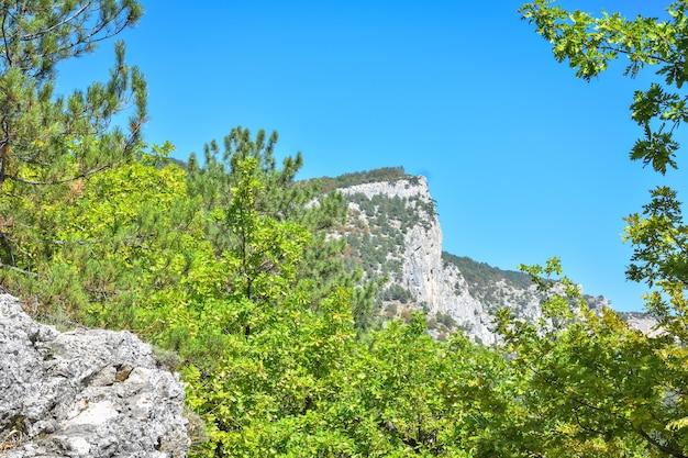 Vistas da montanha na vegetação, colinas verdes Foto Premium