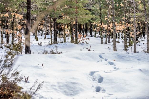 Vistas maravilhosas paisagem de fundo de uma cena de montanha de neve do inverno