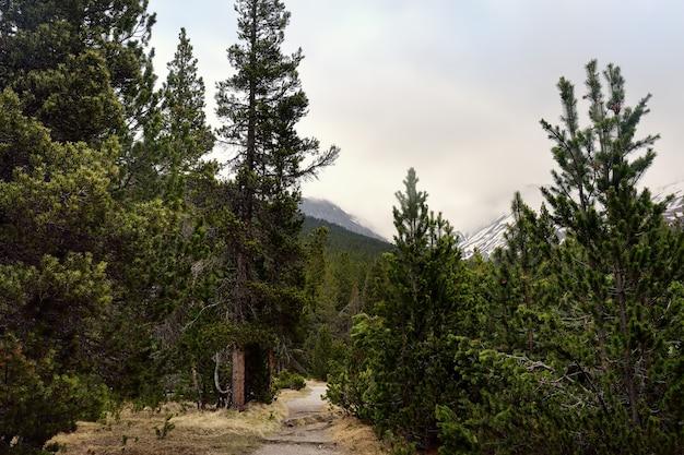 Vistas panorâmicas do parque nacional suíço no dia de mola.