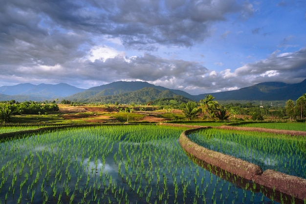Vistas panorâmicas dos campos de arroz com a luz do sol brilhando nas fileiras das montanhas