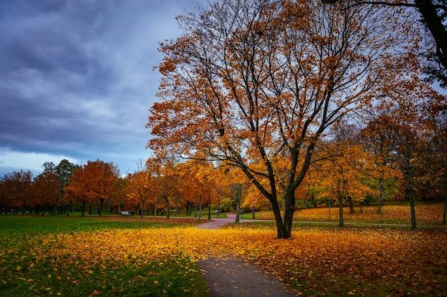 Visualização amarela da folhagem da árvore de outono. árvore amarela de outono no parque ao entardecer. cena de árvore da natureza do outono.