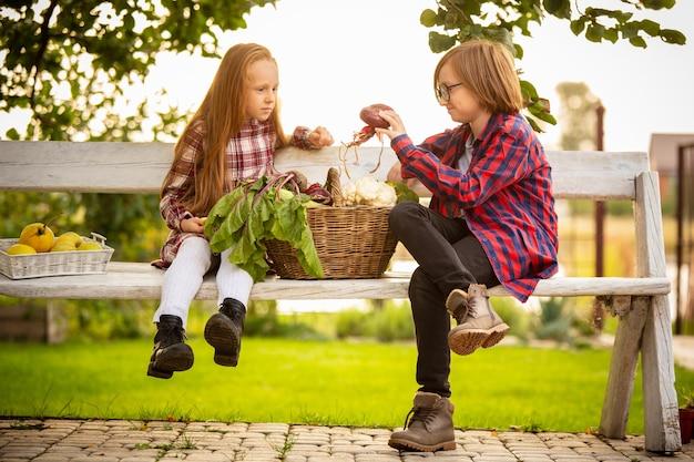 Vitaminas. feliz irmão e irmã recolhendo maçãs juntos em um jardim ao ar livre.