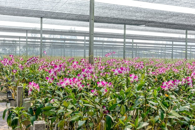 Viveiro de orquídeas