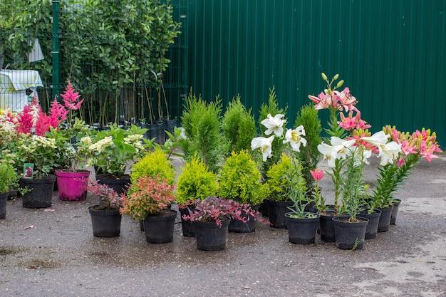 Viveiro de plantas crescendo e vendendo diferentes plantas de jardim