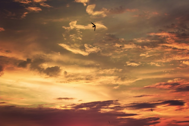Vívido, dramático, crepúsculo, céu ocaso, com, coloridos, nuvens, e, silhuetas, de, pássaros