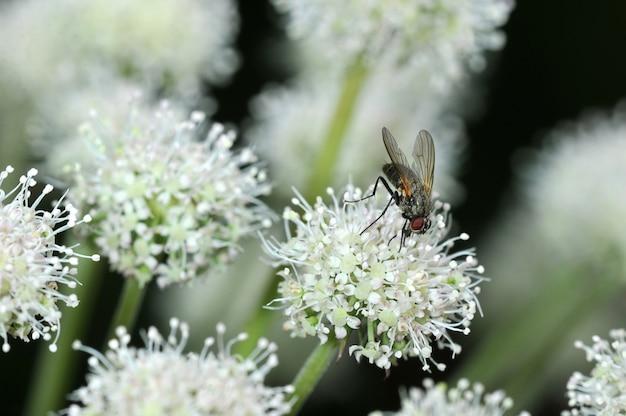 Voar sentado em uma flor