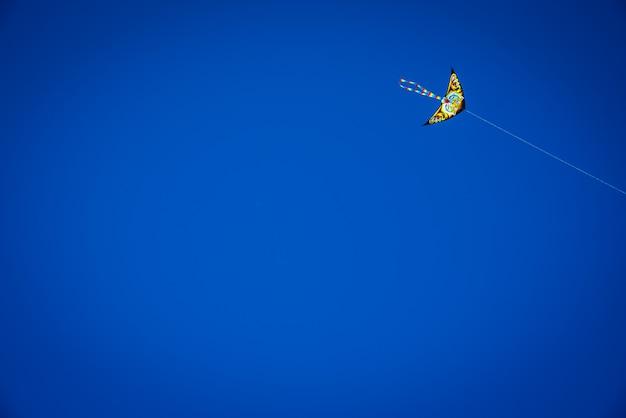Voo colorido do papagaio no céu azul, espaço negativo para a cópia.