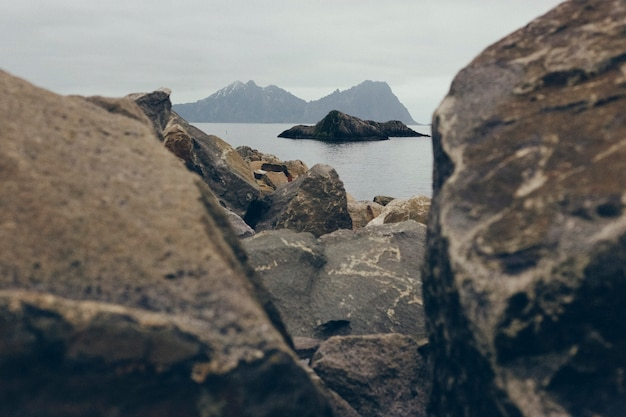 Voo da gaivota entre as rochas do mar do norte um dia nevoento e frio.