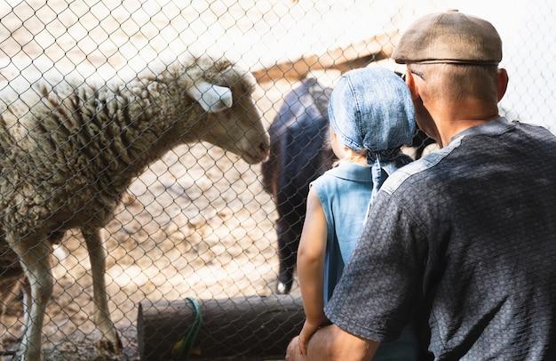 Vovô com neto, olhando para os animais