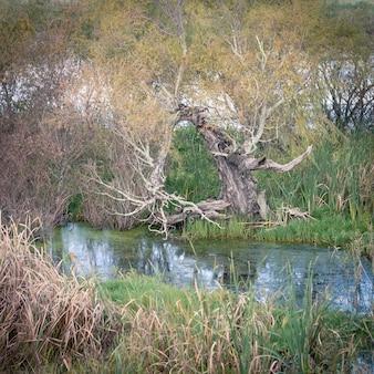 Wakkerstroom wetland.