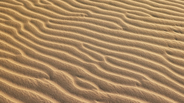 Wawes na areia clara