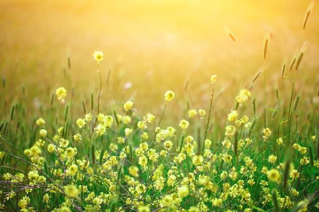 Wildflowers amarelos bonitos na grama verde.