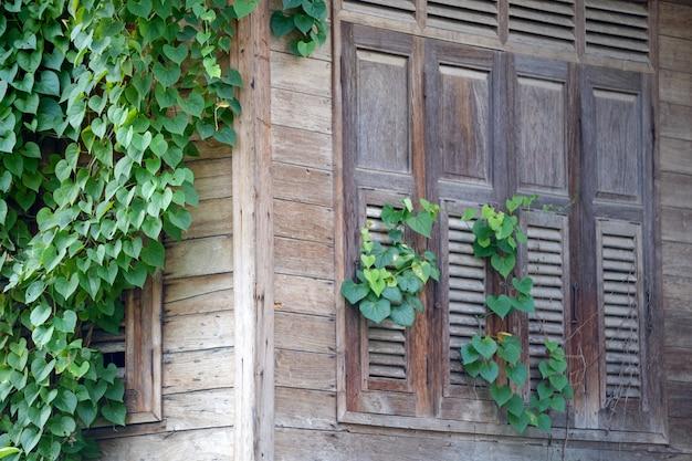 Windows ivy