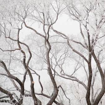 Winnipeg, geada do inverno
