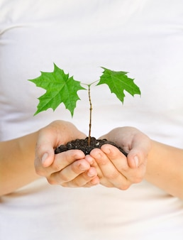 Wooman segurando uma planta entre as mãos no branco