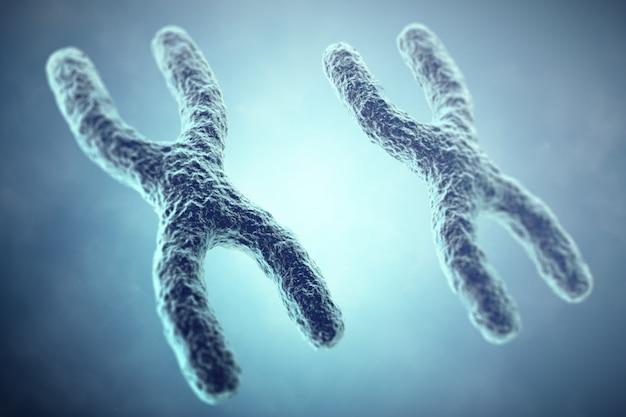 Xx conceito de cromossomo. sexo heterogamético feminino. ilustração 3d