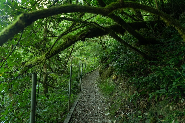 Yew-boxwood grove, national park, tourist path in green forest