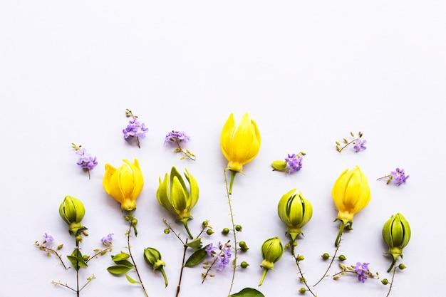 Ylang ylang com flores roxas na primavera