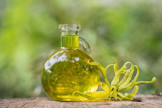 Ylang-ylang ou cananga odorata flor e óleo na natureza.
