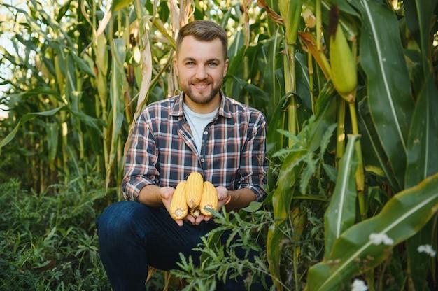 Yong bonito agrônomo no campo de milho e examinando as colheitas antes da colheita. conceito de agronegócio. engenheiro agrônomo em um campo de milho.