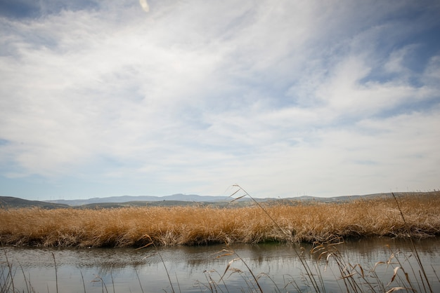 Zonas húmidas, com, pântano, vegetação, em, gigantesco, rota, em, padul, granada, andalusia, espanha