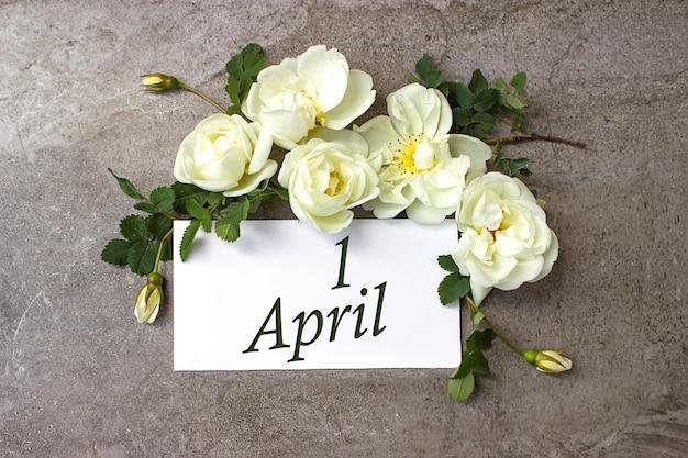 1. april . tag 1 des monats, kalenderdatum. weiße rosen grenzen auf pastellgrauem hintergrund mit kalenderdatum. frühlingsmonat, tag des jahreskonzepts.