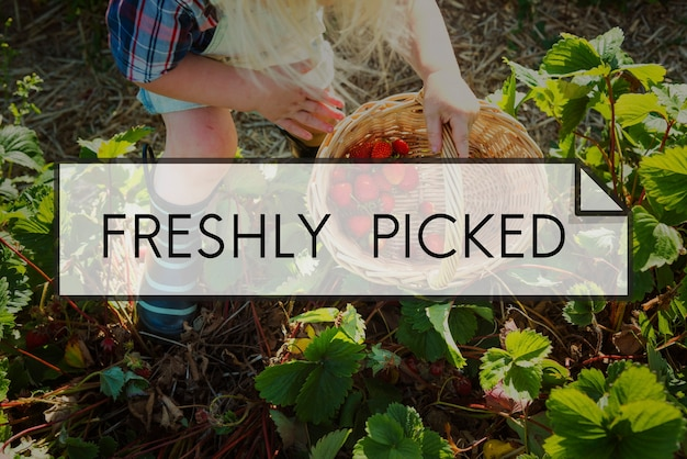 100% natur bio frisch gepflückte gesunde ernährung