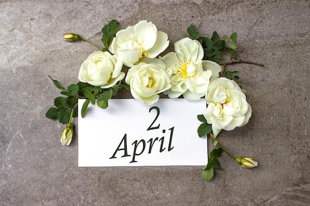 2. april. tag 2 des monats, kalenderdatum. weiße rosen grenzen auf pastellgrauem hintergrund mit kalenderdatum. frühlingsmonat, tag des jahreskonzepts.