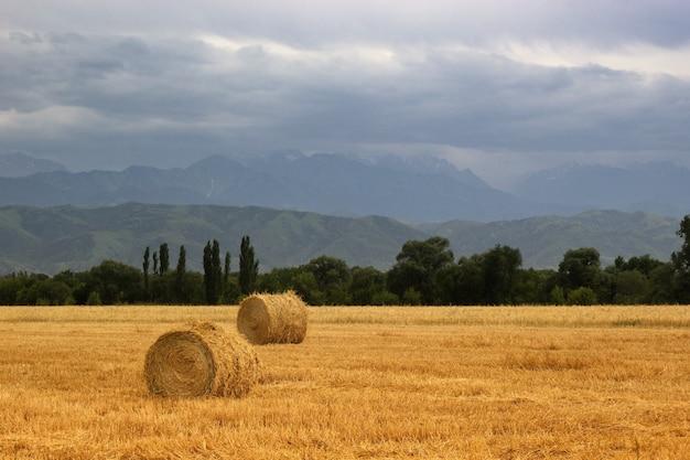 2 heuhaufen rollt auf einem landwirtschaftlichen feld in den ausläufern zentralasiens mit kopierraum