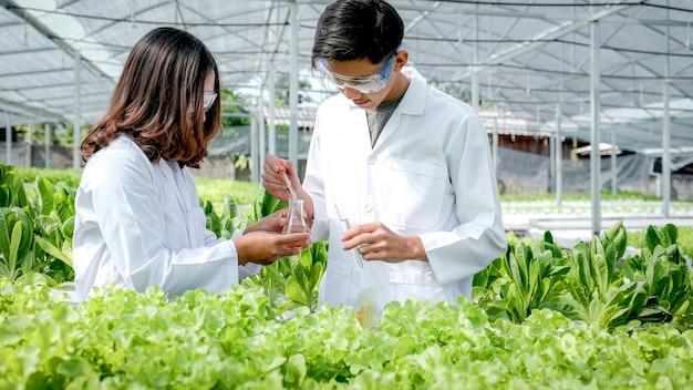 2 wissenschaftler untersuchten die qualität von gemüse-bio-salat und -salat aus der hydrokulturfarm des landwirts.