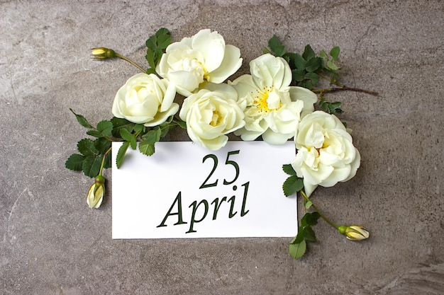 25. april. tag 25 des monats, kalenderdatum. weiße rosen grenzen auf pastellgrauem hintergrund mit kalenderdatum. frühlingsmonat, tag des jahreskonzepts.