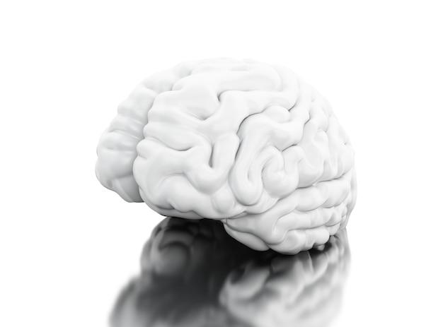 3d ansicht des menschlichen gehirns. wissenschaft anatomie konzept